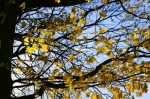 Bright Leaves I by Richard Osbourne