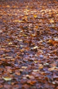 Autumn Leaves II by Richard Osbourne