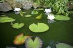 Pond With Waterlilies I by Richard Osbourne