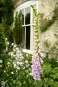 Cottage Garden by Richard Osbourne