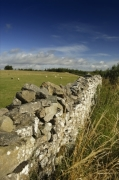 Dry Stone Wall - Yorkshire Dales by Richard Osbourne