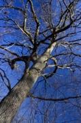 Winter Tree by Richard Osbourne