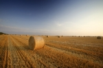 Hay Bales by Richard Osbourne
