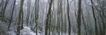 Winter Woodland II by Richard Osbourne