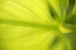 Palm Leaf by Richard Osbourne