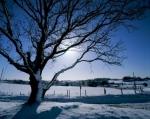 Norfolk Winter II by Richard Osbourne