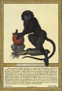 Monkey II by Tavola