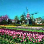 Lisse, Holland by Stuart Black