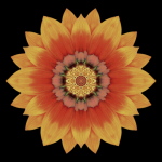 Gazania by David Bookbinder