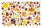 Leaves by Michael Peuckert