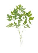 Petroselinum neapolitanum, Parsley - Flat leaf parsley by Carol Sharp