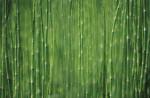 Equisetum fluviatile Horsetail - Water horsetail