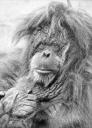 Old Monkey by Mirrorpix