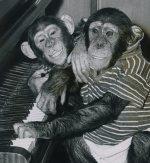Bugsy & Jinxsy playing piano by Mirrorpix