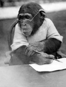 Mike the clever Chimpanzee by Mirrorpix