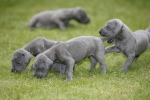 Puppies born in Urmston by Mirrorpix