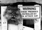 Baby Jonathan the attack cat is on guard by Mirrorpix