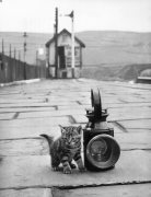 Kitten by Mirrorpix