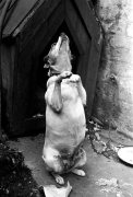 Begging, 1939 by Mirrorpix