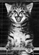 Six-week-old smiler by Mirrorpix