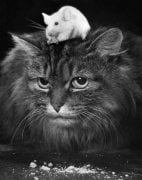 Cats and Mice by Mirrorpix