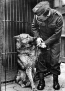 World War II. Mascots Dogs by Mirrorpix