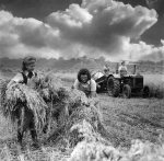 Women's land army harvesting oats, 1941 by Mirrorpix