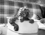 Bathtime Bubbles by Mirrorpix
