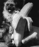 Monkeys, 1955 by Mirrorpix