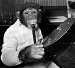 Chimps: Mandy by Mirrorpix