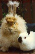 An odd couple - rabbits by Mirrorpix