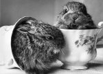 Bunny rabbits in a tea cup by Mirrorpix