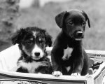 Two cute puppies looking for a home by Mirrorpix