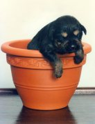Puppy sleeps in a plant pot by Mirrorpix