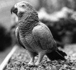 A parrot by Mirrorpix