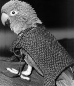 Rocky the parrot by Mirrorpix
