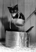 Waiter there's a kitten in my spaghetti! by Mirrorpix