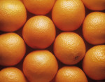Citrus sinensis, Orange by Jess Koppel