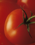 Lycopersicon esculentum, Tomato by Jess Koppel