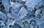 Quercus robur, Oak by John Bellars