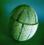 Cucumis melo, Melon - Canteloupe melon by Lisa Barber