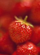 Fragaria x ananassa, Strawberry by Martin O'Neill