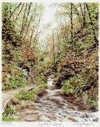 Lydford Gorge by Glyn Martin