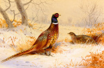 Cock & Hen Pheasant