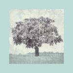 Meadow Land II by Bill Philip