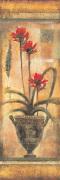 Rojo Botanical VII by John Douglas