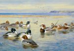 Goldeneye and Longtail by Archibald Thorburn
