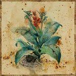 Aloe II by Jennifer Hollack