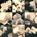 Orchid Rhapsody by Katja Marzahn
