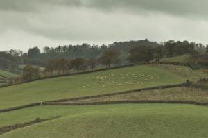 Rolling fields with animals grazing, Devon, UK by Assaf Frank